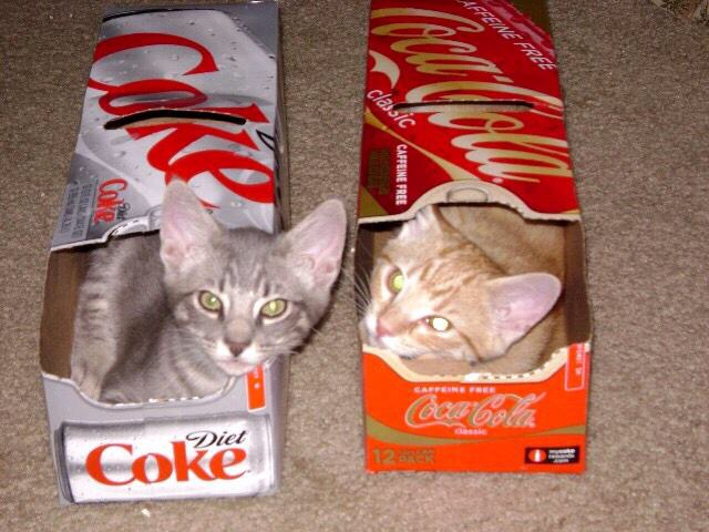 Coke Cats